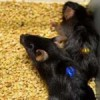 Drug successfully reverses aging in animal trials