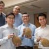 Cancer scientists decipher the complete genetic map of durian