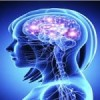 The brain continues to develop new memory cells well into old age