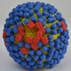 Scientists look into multiple clues for improved influenza vaccine design
