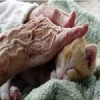 Beneficial to have pets in nursing homes, but it can also pose risks