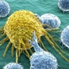 New cell 'kill switch' could potentially cure cancer