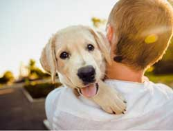 "Early companionship with ""man's best friend"" shown to lessen the risk of developing dementia"