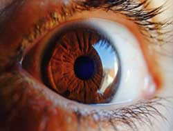 Injecting healthy cells into eyes boosts vision in blind mouse models