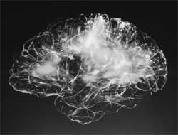 Enzyme regulation may protect the brain against oxygen deprivation damage