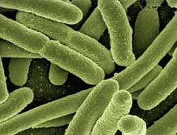 Gut microbiome signatures associated with common mental health disorders