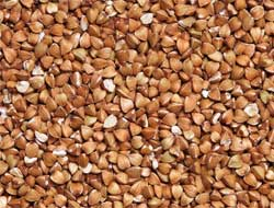 Buckwheat extract found to promote protein clean-up in cells